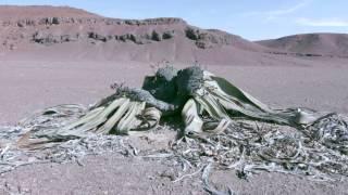 Skelettküste - NAMIBIA