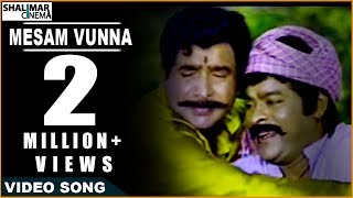 Sneham Kosam Movie ||  Mesam Vunna Video Song || Chiranjeevi,Meena