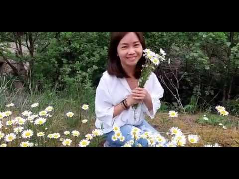 CHOÁNG NGỢP HOA DẠI MÙA HÈ Ở THỤY ĐIỂN - AMAZING WILD FLOWERS IN SUMMER