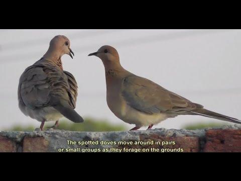Travel Documentary on Kerela and Punjab India