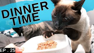 Siamese cat meal plan