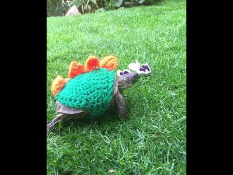 Crochet Tortoise Dinosaur Cosy Youtube