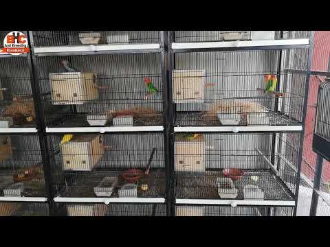 Love Birds Breeding Box and Cage | Love Birds Nest Making