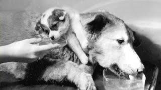 Двухголовая Собака