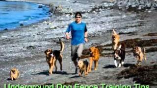 Underground Dog Fence Training Tips