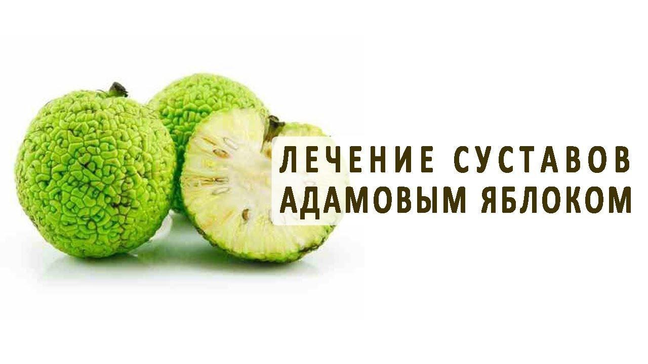 Лечения суставов плодами яблоками чем лечить артроз суставов челюсти