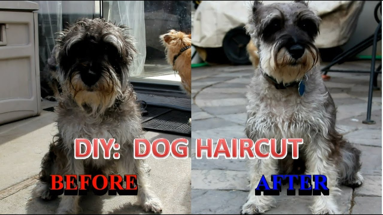 how to cut dogs hair