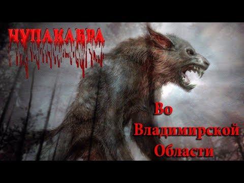 Чупакабра во Владимирской области   Чупакабра в Меленках   Чупакабра Меленки   Чупакабра в Муроме