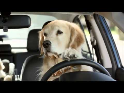 Subaru Dog Commercial - funny commercials!