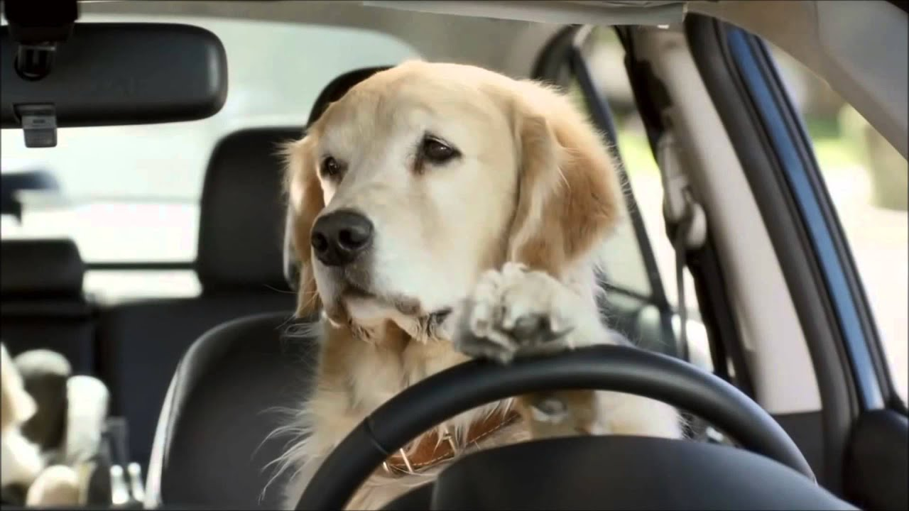 Subaru Dog Commercial Funny Commercials Youtube