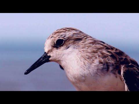 Battling Bird Flu: Saving Wild Birds and Humans - Project by EAAFP, 2016