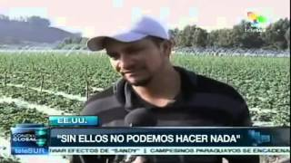 United States Depends on Migrant Farm Workers