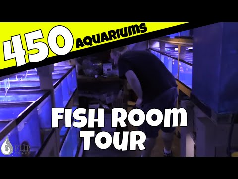 The Fish Room that Never Ends - 450 Aquariums in a Basement