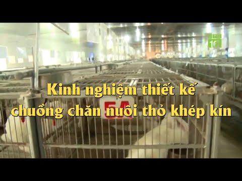 Thiết kế chuồng nuôi thỏ - Cách làm chuồng nuôi thỏ khép kín