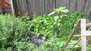 June garden tour & update
