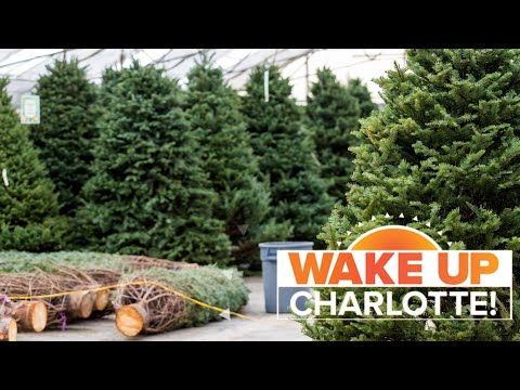 Jim E. Chonga - The Cheapest and Most Expensive Days to Get Your Christmas Tree!