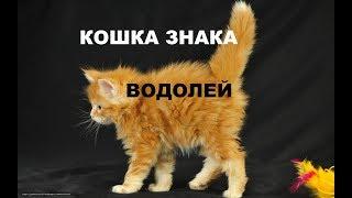 КОШКИ  МЕНЯЮТ СУДЬБУ ХОЗЯЕВ . кошка  знака ВОДОЛЕЙ. гороскоп