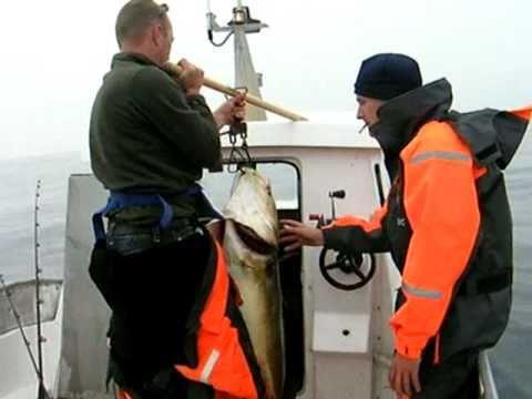 Havfiskeri Røst ( torsk 20.0 kg ) fishing norway