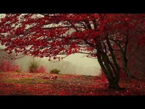Relax music 2017-Beautiful Chinese Music 18 Traditional Qing Guo Qing Cheng