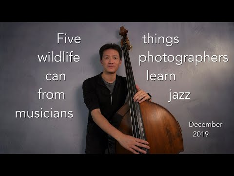 Five Things Wildlife Photographers Can Learn From Jazz Musicians (December 2019)
