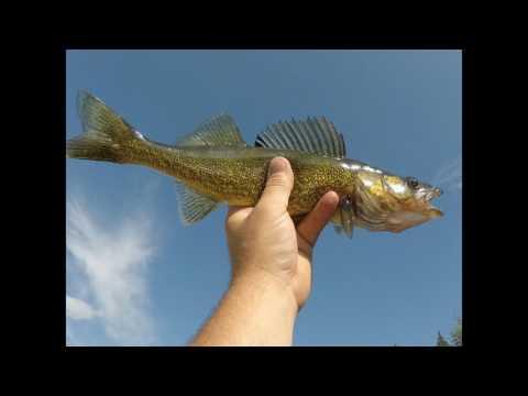 Walleye Fishing in Northern Saskatchewan (Deschambault Lake)