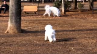 穏やか~な大型犬エリア.