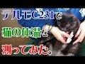 テルモC231で猫の体温を測ってみた。 CAT VIDEO 【Japanese】