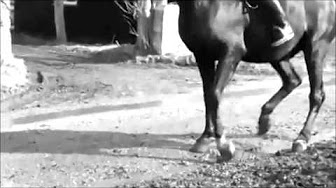 Murder at the Gallop Full Movie