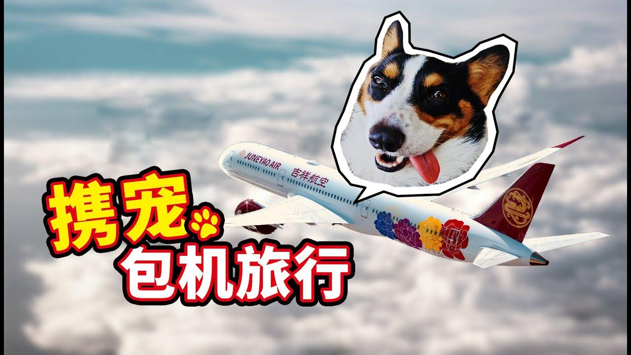【小短腿Duby】我把狗子带上飞机啦,60多只狗狗包机去三亚