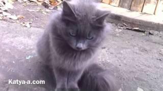 Серый Кот. Глаза... / Gray cat. eyes
