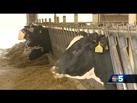 Dairy farmers urged to move fast on MPP insurance