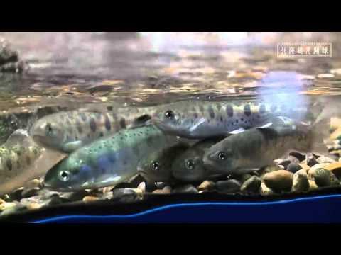 おんねゆ温泉 山の水族館 (Yamano Aquarium)