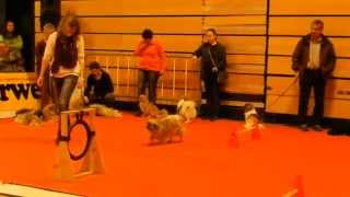 スイスのWinterthurで行われた犬のメッセHUND2014 Präsentation: Tibet-...