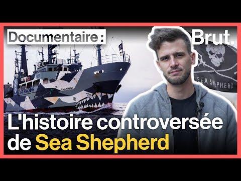Pirates ou sauveteurs des mers ? L'histoire de Sea Shepherd (avec Hugo du Tatou)