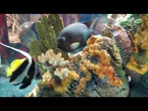 Dragon Moray Eel and Fish swimming at the Norwalk Maritime Aquarium - December 11, 2016