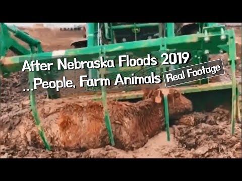 Real Footage, After Nebraska Floods 2019 ... people, farm animals