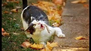 Fotos Tiradas na Hora certa! - Gatos