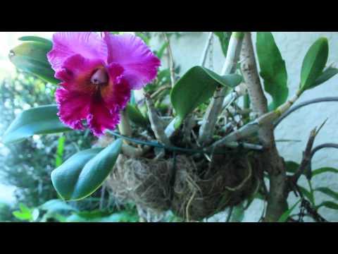 Орхидеи-коллекционные, природные виды