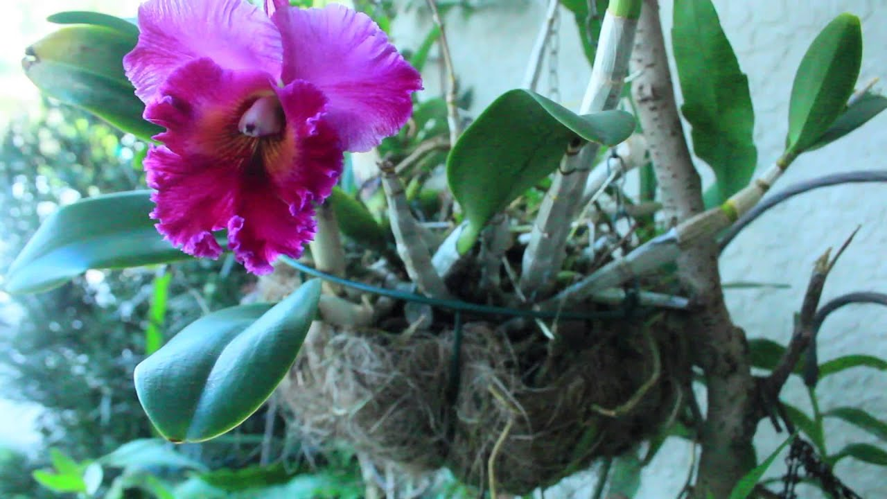 Etonnant MY ORCHID GARDEN U0026 PROPAGATION   YouTube
