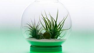 Top 5 Smart Indoor Garden Gadgets Invention
