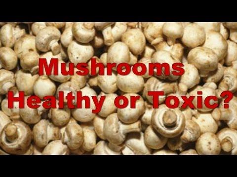 Fundamental essentials Most Nutritious Methods to Prepare Mushrooms