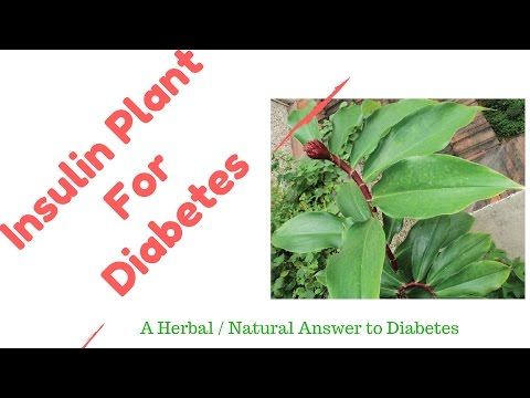 insulin-plant-a-diabetes-home-natural-herbal-remedy-||-magic-cure-for-diabetes-naturally