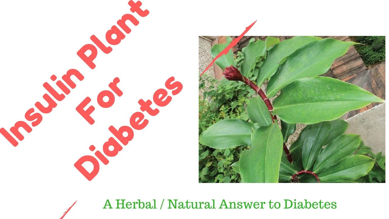 What Is The Natural Cure For Diabetes