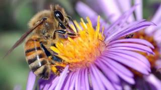 With Bee Pollen Weight Loss is Achievable