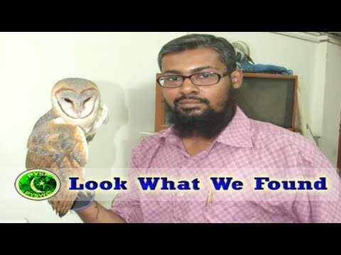 VLog about Barn Owl | PYSF/PYSWO