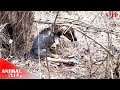 Rescue Stray Dog Who Spent Life Long Time in the Wood with the Injured Legs