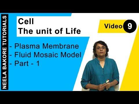 Cell - The Unit Of Life - Plasma Membrane - Fluid Mosaic Model - Part - 1