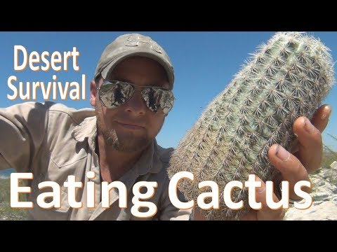 Cactus Eating -Desert Survival- Food & Water