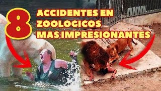 Los 8 Accidentes En Zoológicos Mas Impactantes