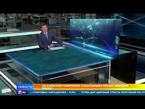 Вопрос: Что кусает в Азовском море?